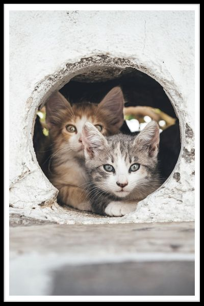Cats Hiding in Hole Poster