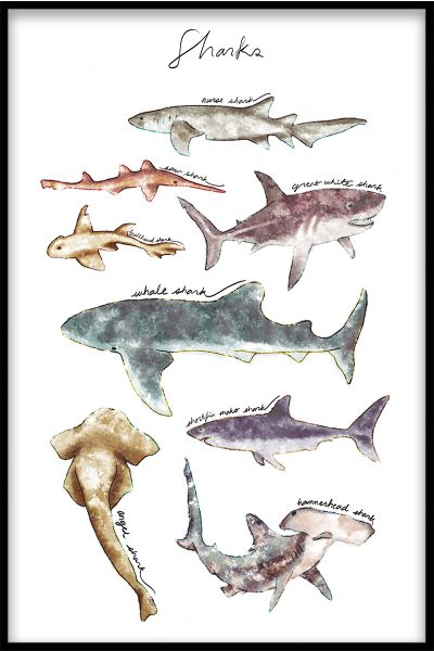 Sharks Collection Poster