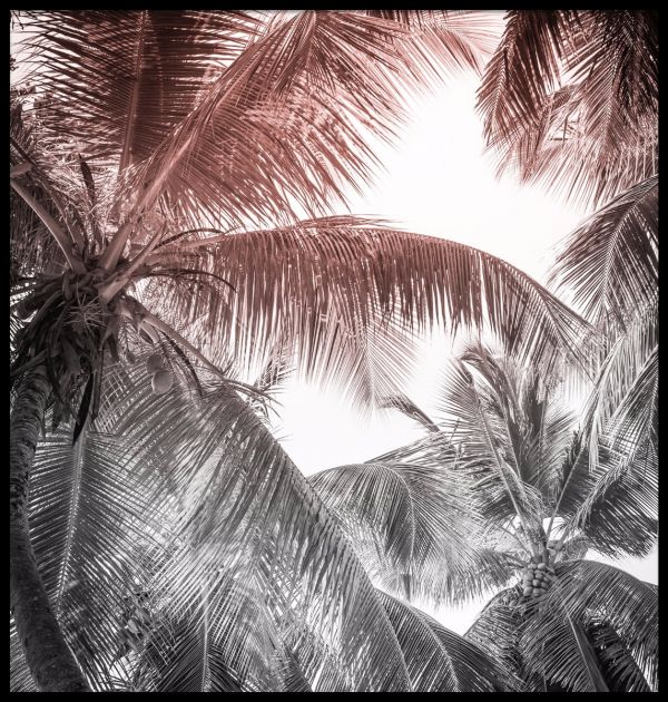 High Palm Tropical Scene Poster