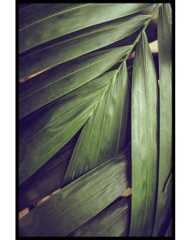 Rain-forest Leaves Poster
