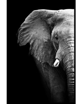 Elephant Portrait Black & White Poster