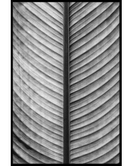 Black & White Palm Leaf Poster