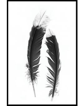 Feather Black & White Poster