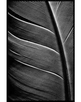 Bird Feathers Poster
