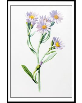Starwort Illustration Poster