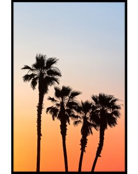 Palm Sunset Poster