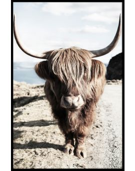 Highland Cattle N06 Poster