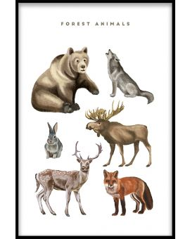 Forest Animals Illustration Poster