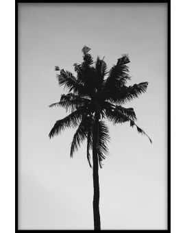Palm Tree Black & White Poster