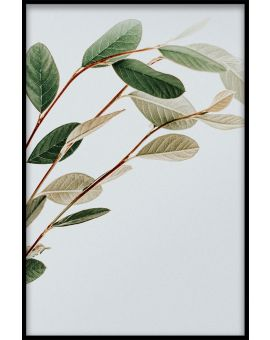 Abstract Botanical N01 Poster