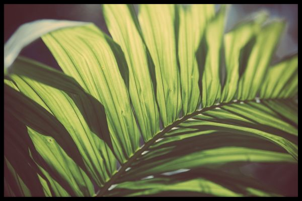 Tropical Trees N02 Poster