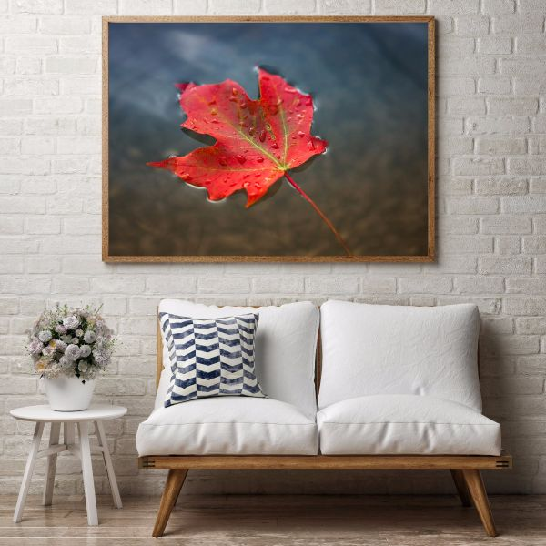 Red Maple Leaf in Water Tavla