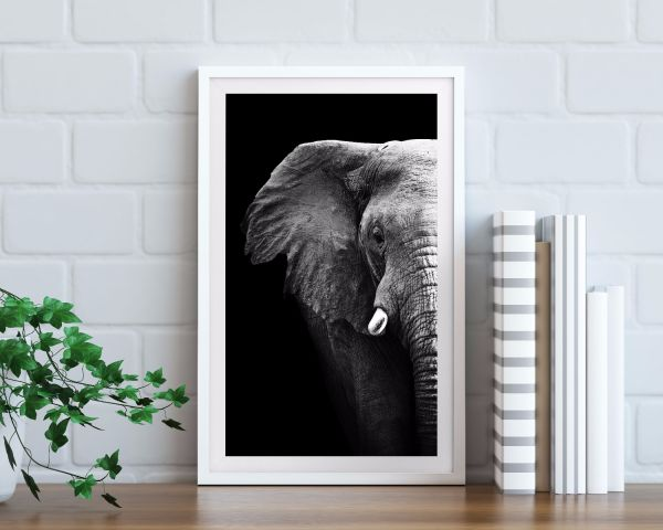 Elephant Portrait Black & White Tavla