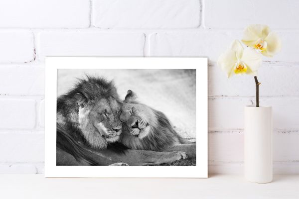 Lion Love Tavla
