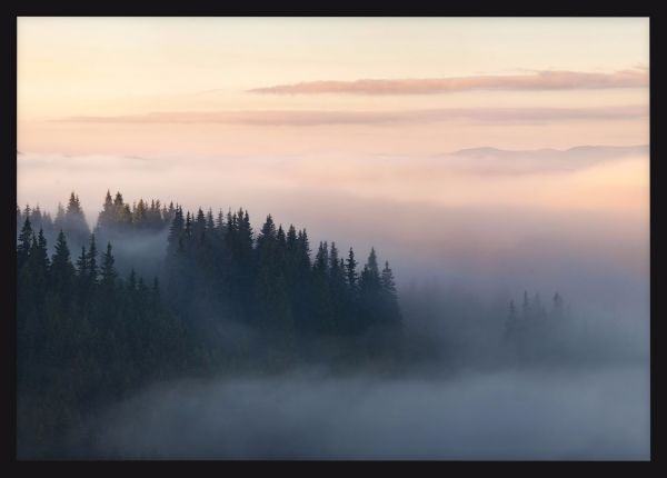 Mountain Forest in Fog Poster
