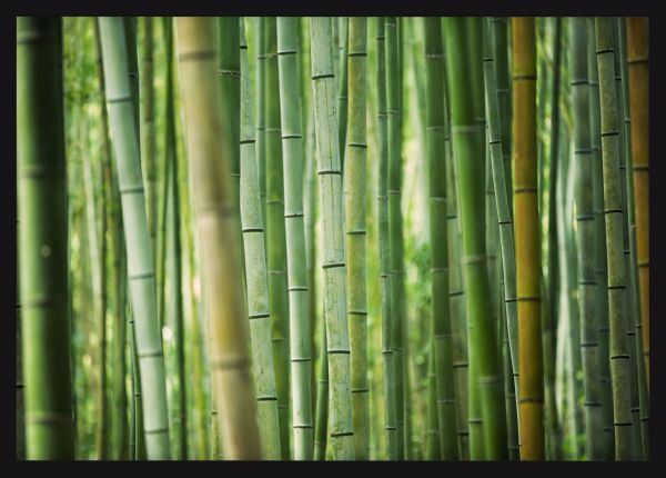 Bamboo Grove Poster
