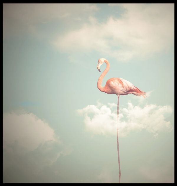 Flamingo Illustration Poster