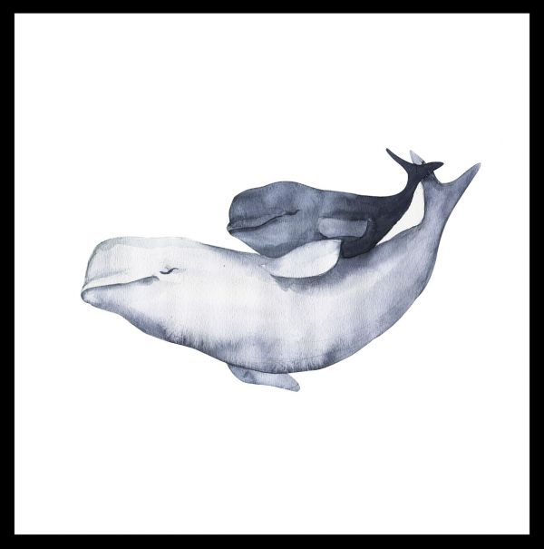 Beluga Whale Family Watercolor Poster