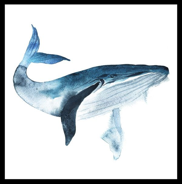 Blue Whale Watercolor Poster
